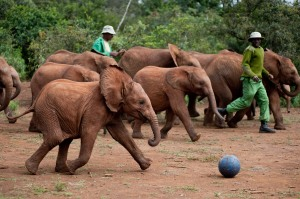 Fun places to hang out with your kids in Nairobi